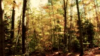 Sawyer Trail