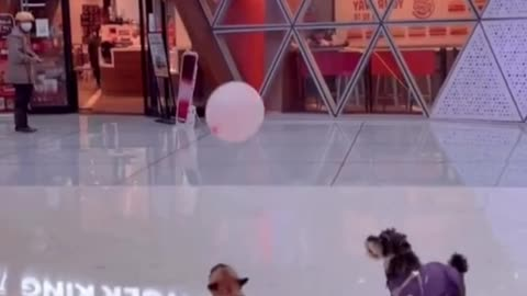 I am a puppy who loves to play with balloons