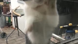 Cat wants to come inside