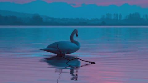 Geese bird