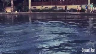 Elephant Dives in Pool