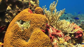 wonderful Nature in the sea