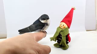 Lovely Swallow bird