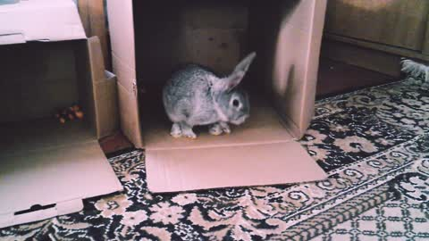 My rabbit for the first time with us