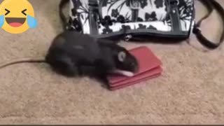 Naughty mouse