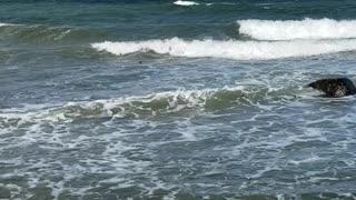 Montauk sea shore