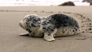 I saw a baby seal on the beach???