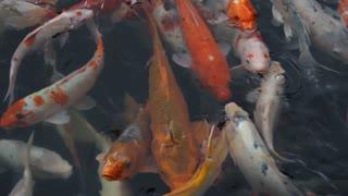 Beautiful fish 13