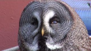 Beautiful owl very cute