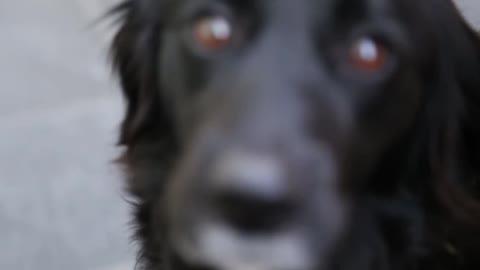 Cute black dog$