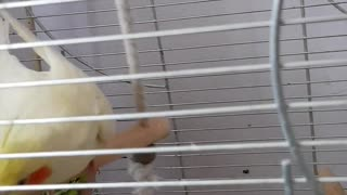 Enter and watch this fun parrot😍