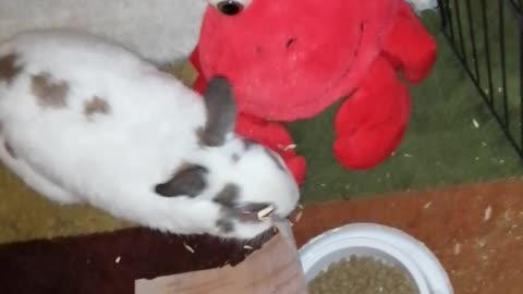 Chuck Bunny...20