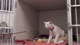 Wonderful cat playing
