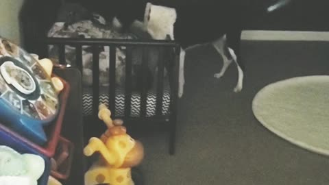 Dog checks on child before bed