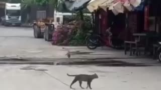 A bird trying to annoy a cat