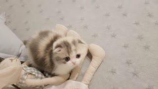 Cute kittens ever