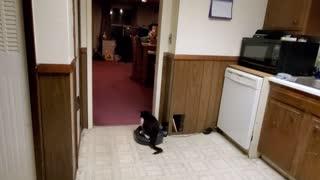 Lazy Kitty Loves Riding Roomba