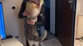 Ecstatic dog emotionally reunited with owner after Covid quarantine
