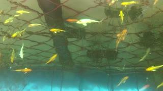 Relaxing fish tank