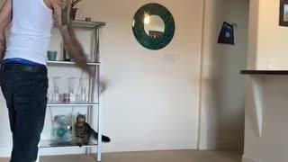 Cat Stylishly Leaps to Snag Rag