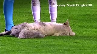 Uninvited guest: Dog invades Bolivian soccer match