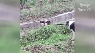 very Funny Cats and Dogs Compilation