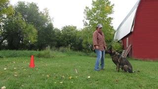 Novice Trick Dog - 13. Baton Jumping.