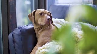 BEAUTIFUL DOG LOOKS