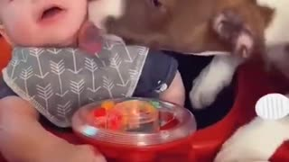 Dog Shows The Baby Some Love