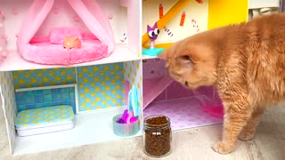 building a NEW HOUSE for CAT