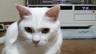 White Cat's Orange-chan