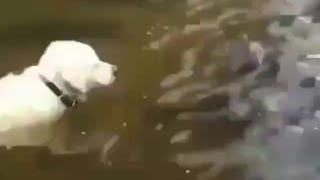 Dog catches fish by himself