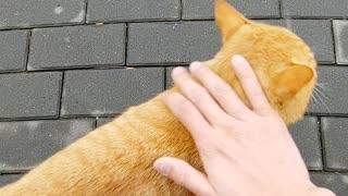 When a Korean soldier met a cat,