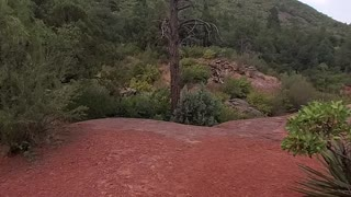 Sedona Arizona Rivers, Red Rocks, and the Forest Come Together