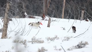 Wyoming Wolf Pack Shares Some Shenanigans