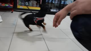 An energetic dog makes a mess in the store