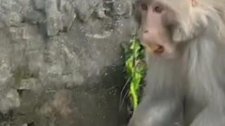 Feeding monkey | animal feeding video