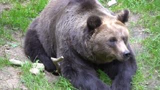Polar Bear   Brown Bear   Black Bear