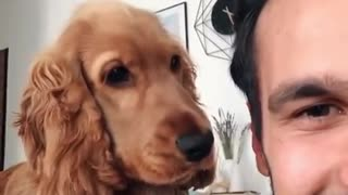 Pup is just so confused by owner's mocking sounds