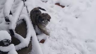 Malyki sees snow
