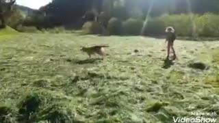 Fun 🐕🦺and play with dog kats🐕