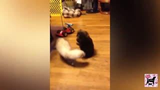 Cute Ferret vs cute puppy