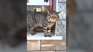 WOW … Cats talking !! these cats can speak english