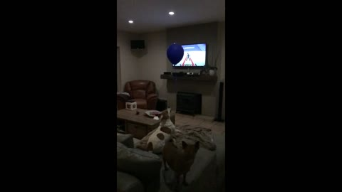 Dog successfully snatches balloon in slow motion