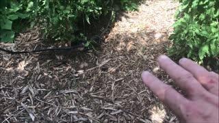 The Kansas Gardener 2019