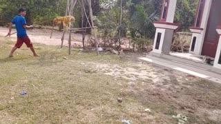 Fake Tiger Vs Prank Dog.