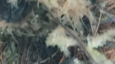 Tadpoles & Froglets Underwater Video