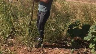 Catching a Wild Belt Snake