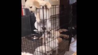 Cute dog wants to get out of the cage