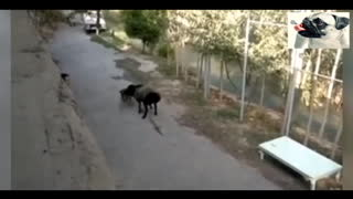 Super Funny Moments Human and Animals Fails of 2021 Weekly Compilation